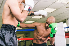 Two boxers training. And making sparring Stock Image