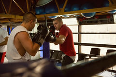 Two Boxers At Training. Two Male Boxers At Boxing Ring Fighting Royalty Free Stock Photography