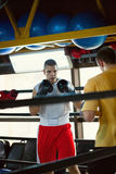 Two Boxers At Training Stock Photography