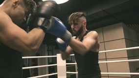 Two boxers training punches and defense. On ring stock footage