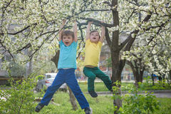 Two boys brothers kids hanging from a blossom spring tree Royalty Free Stock Images
