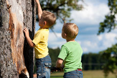 Two boys climbing on a tree. Two little boys climbing on a tree on a summer day royalty free stock photos