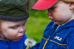 Two boys and a dandelion Stock Images