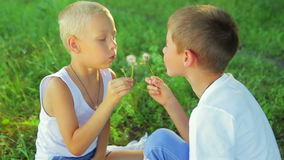 Two boys dressed in white, blowing dandelions on stock video