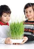 Two boys with green grass Royalty Free Stock Photography