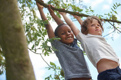 Two boys hanging from a tree Royalty Free Stock Images