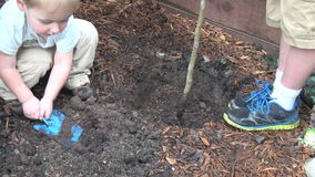 Two boys planting a tree in backyard. Two brothers planting a tree in backyard, working together. Little one helping big brother, digging the soil stock video footage