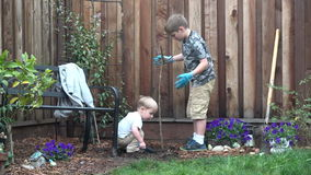 Two boys planting a tree in backyard. Two brothers planting a tree in backyard, working together. Little one helping big brother, digging the soil stock footage