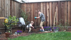 Two boys planting a tree in backyard. Two brothers planting a tree in backyard, working together. Little one helping big brother, digging the soil stock video