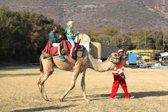 Two boys riding on camel back at Festival Stock Photos