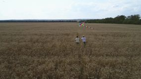 Two boys are running along a wheat field with a kite. Teamwork. Outdoor games, childhood dreams. Summer holidays with family in the countryside stock video footage