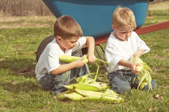 Two boys shucking corn by wheelbarrow Stock Image