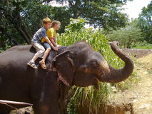 Two boys sit on an elephant Stock Photography