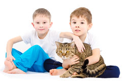 Two boys sitting together with a cat Scottish Straight Royalty Free Stock Image