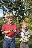 Two boys (3-6) standing beneath apple tree in garden, holding apples in t-shirts, smiling Royalty Free Stock Photos