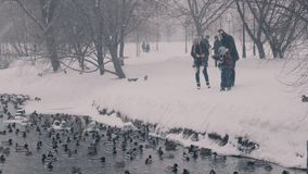 Two boys and there parents feeding the ducks in winter park stock footage