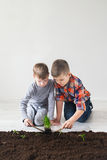 Two boys are thrown plants for Earth Day Royalty Free Stock Photography