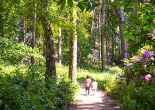 Two boys walking on path through woods. Siblings walking through woodland with lush, green foliage and purple rhododendron Stock Photos