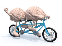 Two brains riding tandem bicycle Royalty Free Stock Photography