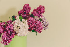 Two Branch of White and Purple Lilac in the Green Pitcher.White Background Royalty Free Stock Photography