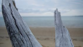 Two branched driftwood in the shoreline stock footage
