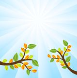 Two branches with autumn leaves on a background sky Royalty Free Stock Photo