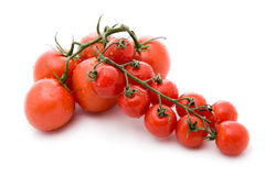 Two branches tomato Stock Image
