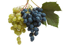 Two branches of white and blue grapes Royalty Free Stock Image