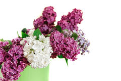Two Branches of White and Purple Lilac in the Green Pitcher.White Background Royalty Free Stock Photos