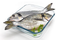 Two bream in glass baking dish. Two gold in glass baking dish Royalty Free Stock Photography