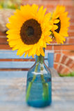 Two bright beautiful sunflowers Royalty Free Stock Photos