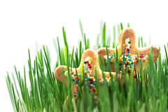 Bright Stars in Juicy Grass. Summer Concept. Holidays stock photography