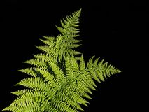 Close-up of two fern leaves growing into the picture stock images