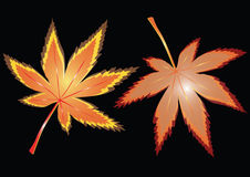 Two bright maple leaves Royalty Free Stock Photography