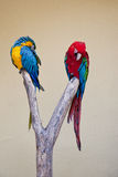 Two brightly coloured Amazon parrots Stock Images