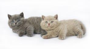 Two British kittens Royalty Free Stock Photos
