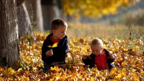 Two brothers on autumn foliage, child play with leaf, eat grape, enjoy nature. Portrait of two brothers sit on autumn foliage, child play with leaf, eat grape stock footage