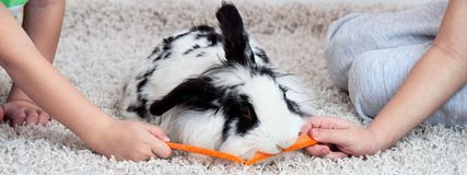 Two brothers feed their beloved rabbit with a carrot. Stock Photography