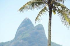 Two Brothers Mountain Rio de Janeiro Brazil Palm Tree Stock Photos