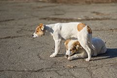 Two brothers of stray puppies Royalty Free Stock Photo