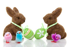 Two brown bunnies. With easter eggs on their necks and three little colored chicks isolated over white royalty free stock images