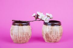 Two brown ceramic cups on a pink background. A branch with flowers and a cup. apricot bloom. Utensils for baking. Clay royalty free stock images