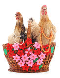 Two brown chickens. Royalty Free Stock Images