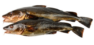 Two brown cods Royalty Free Stock Photography