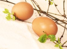 Two Brown Easter Eggs Sepia. Two Chicken Brown Easter Eggs Sepia Effect Stock Images