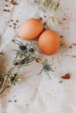 Two brown eggs Stock Images