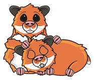 Two brown hamsters Stock Images