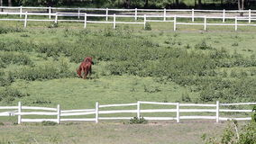 Two brown horses. In corral stock video
