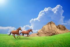 Two brown horses run through green meadow Stock Photo
