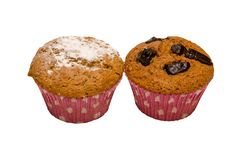 Two brown muffins Royalty Free Stock Photo